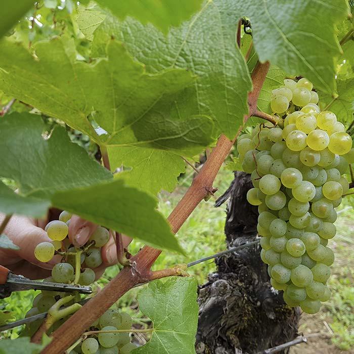 domaine-les-5-wy-vins-arbois-jura-1