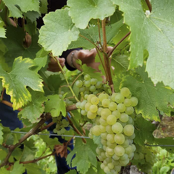 domaine-les-5-wy-vins-arbois-jura-2