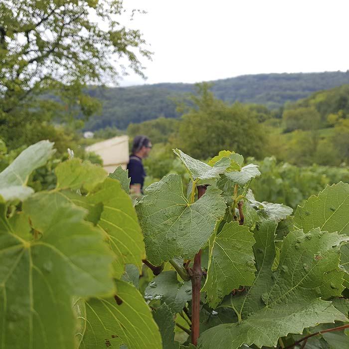 domaine-les-5-wy-vins-arbois-jura-3