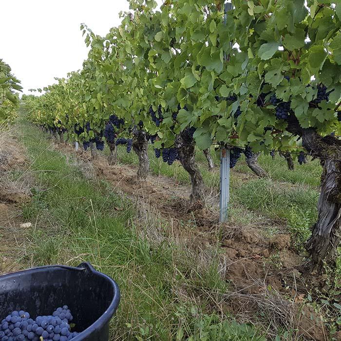domaine-les-5-wy-vins-arbois-jura-4