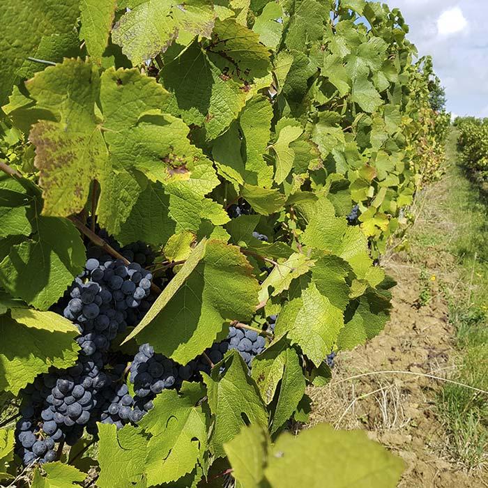 domaine-les-5-wy-vins-arbois-jura-5