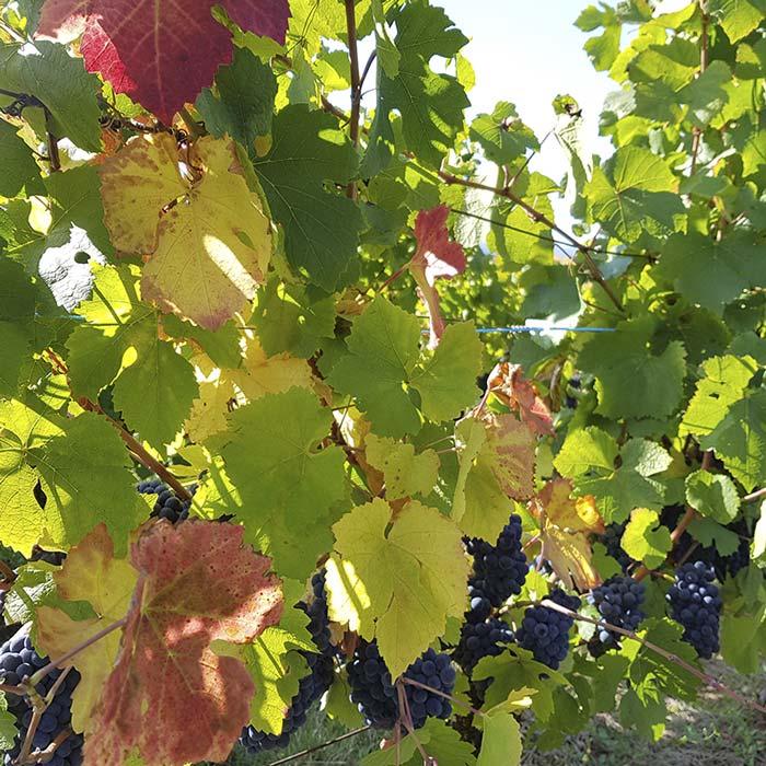 domaine-les-5-wy-vins-arbois-jura-6