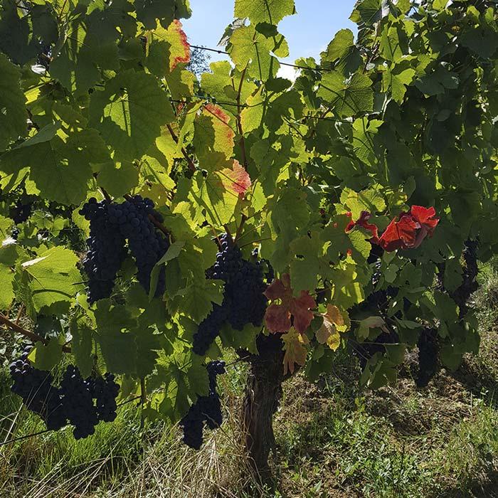 domaine-les-5-wy-vins-arbois-jura-7